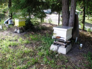 bee hoves